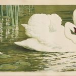 Swans horizontal
