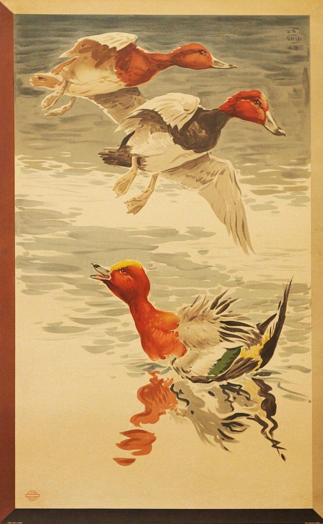 Ducks, London Underground