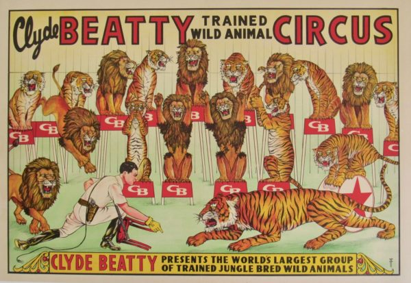 trained Wild Animal poster